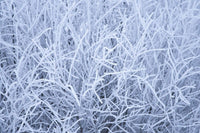 Grass covered  winter frost