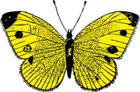 Yellow Comic Butterfly