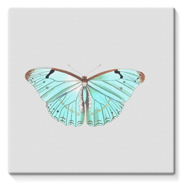 Baby Green Butterfly Stretched Canvas 10X10 Wall Decor