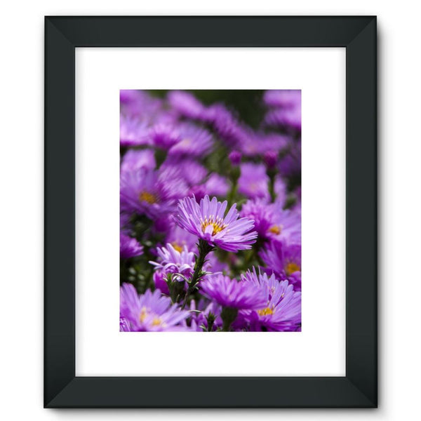 Beautiful Purple Flowers Framed Fine Art Print 12X16 / Black Wall Decor
