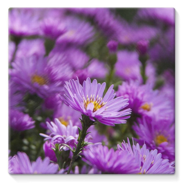 Beautiful Purple Flowers Stretched Canvas 10X10 Wall Decor