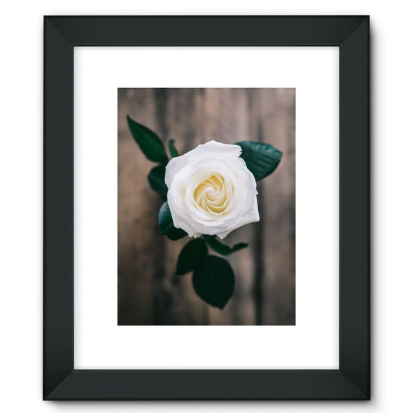 Beautiful White Rose Framed Fine Art Print 12X16 / Black Wall Decor