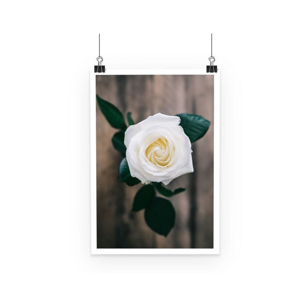 Beautiful White Rose Poster A3 Wall Decor