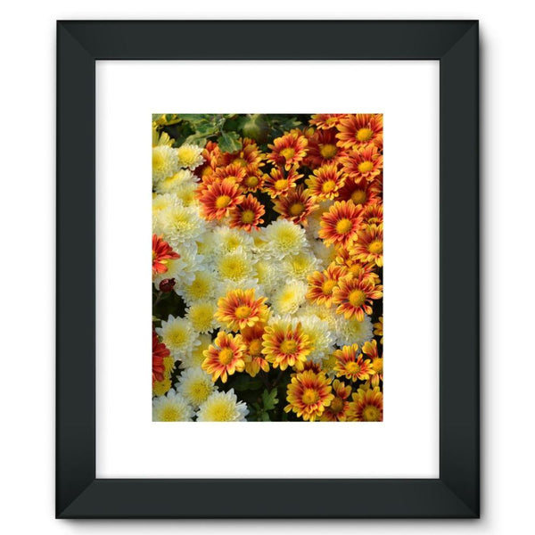 Beautifully Blooming Plants Framed Fine Art Print 12X16 / Black Wall Decor