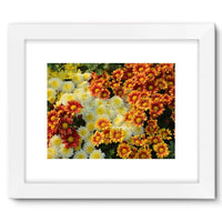 Beautifully Blooming Plants Framed Fine Art Print 16X12 / White Wall Decor