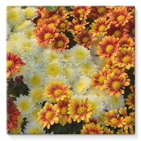 Beautifully Blooming Plants Stretched Canvas 10X10 Wall Decor