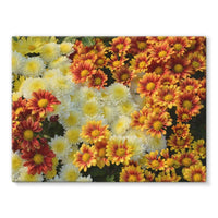 Beautifully Blooming Plants Stretched Canvas 24X18 Wall Decor