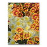Beautifully Blooming Plants Stretched Canvas 24X32 Wall Decor