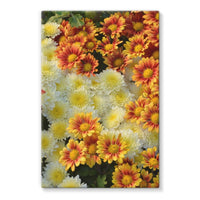 Beautifully Blooming Plants Stretched Canvas 24X36 Wall Decor