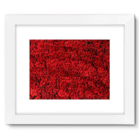 Bed Of Red Roses Framed Fine Art Print 16X12 / White Wall Decor
