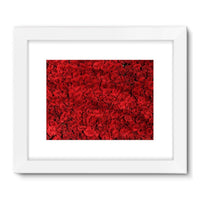 Bed Of Red Roses Framed Fine Art Print 24X18 / White Wall Decor