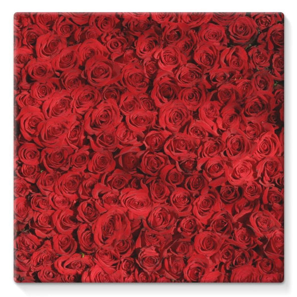 Bed Of Red Roses Stretched Canvas 10X10 Wall Decor