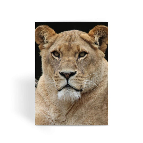 Big Lion Cat Looking Greeting Card 1 Prints