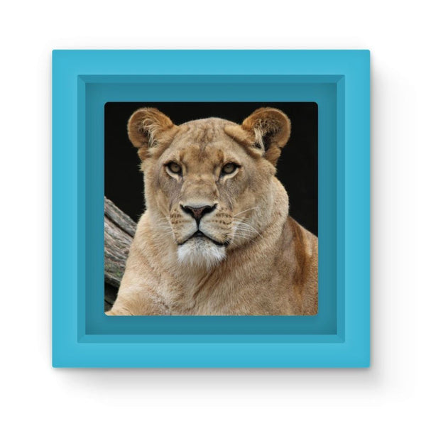 Big Lion Cat Looking Magnet Frame Light Blue Homeware