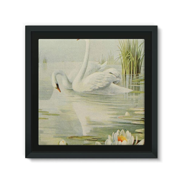 Birds & All Nature 1900 Framed Canvas 12X12 Wall Decor