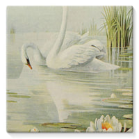 Birds & All Nature 1900 Stretched Eco-Canvas 10X10 Wall Decor