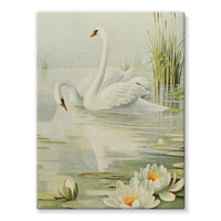 Birds & All Nature 1900 Stretched Eco-Canvas 18X24 Wall Decor