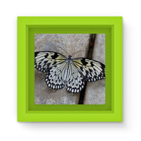 Black White Butterfly Magnet Frame Green Homeware