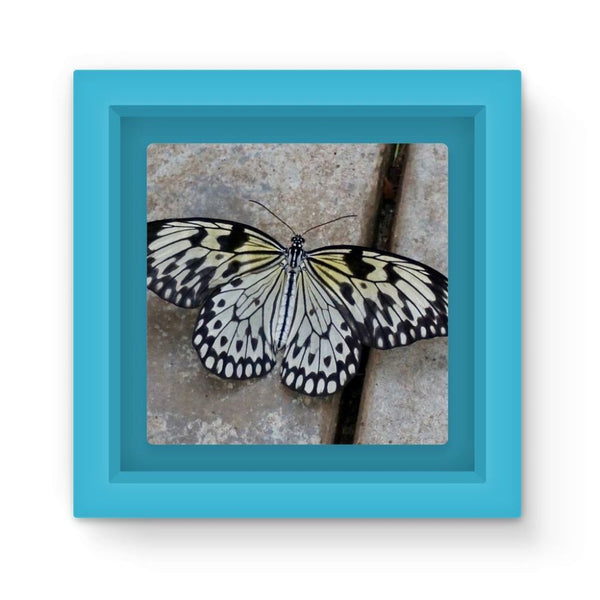 Black White Butterfly Magnet Frame Light Blue Homeware