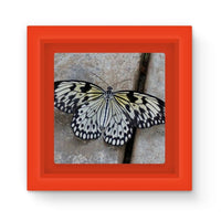 Black White Butterfly Magnet Frame Red Homeware