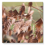 Brown (Dried) Plants Outdoor Stretched Canvas 10X10 Wall Decor