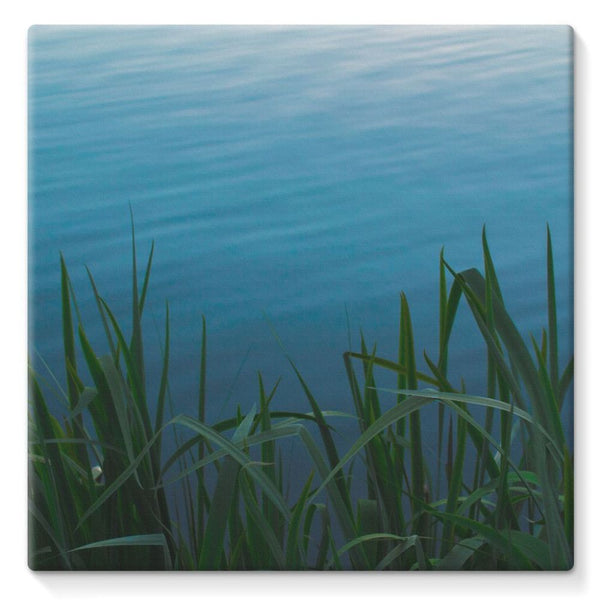 Bushes Near The Water Stretched Canvas 10X10 Wall Decor