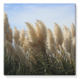 Bushes With Sky Background Stretched Canvas 10X10 Wall Decor