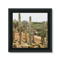 Cactus Plants Framed Canvas 12X12 Wall Decor