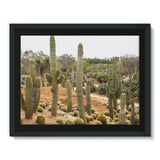 Cactus Plants Framed Canvas 16X12 Wall Decor