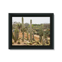 Cactus Plants Framed Canvas 24X18 Wall Decor