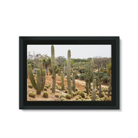 Cactus Plants Framed Canvas 36X24 Wall Decor