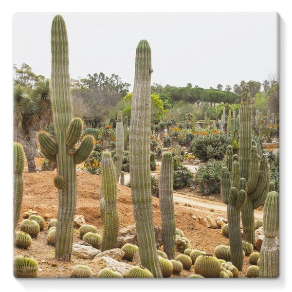 Cactus Plants Stretched Canvas 10X10 Wall Decor