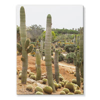 Cactus Plants Stretched Canvas 12X16 Wall Decor