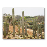 Cactus Plants Stretched Canvas 16X12 Wall Decor