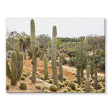 Cactus Plants Stretched Canvas 24X18 Wall Decor