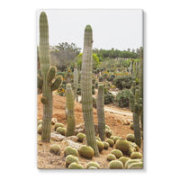 Cactus Plants Stretched Canvas 24X36 Wall Decor