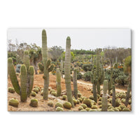 Cactus Plants Stretched Canvas 36X24 Wall Decor