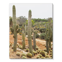 Cactus Plants Stretched Eco-Canvas 11X14 Wall Decor