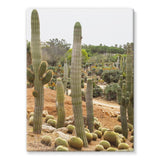 Cactus Plants Stretched Eco-Canvas 18X24 Wall Decor
