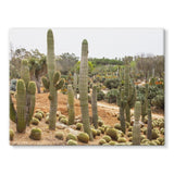 Cactus Plants Stretched Eco-Canvas 24X18 Wall Decor