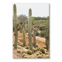Cactus Plants Stretched Eco-Canvas 24X36 Wall Decor
