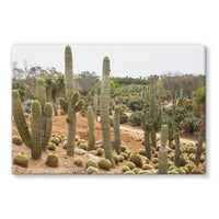 Cactus Plants Stretched Eco-Canvas 36X24 Wall Decor