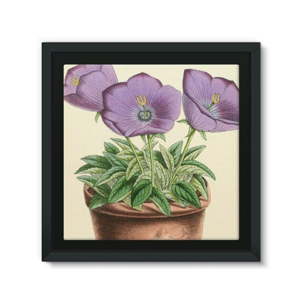 Campanula Turbinata 1869 Framed Eco-Canvas 10X10 Wall Decor