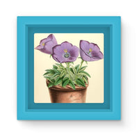 Campanula Turbinata 1869 Magnet Frame Light Blue Homeware