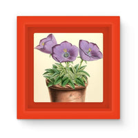 Campanula Turbinata 1869 Magnet Frame Red Homeware