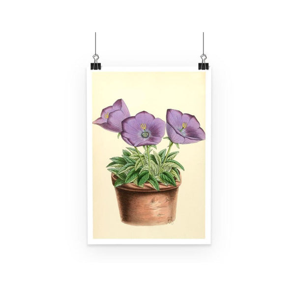 Campanula Turbinata 1869 Poster A3 Wall Decor