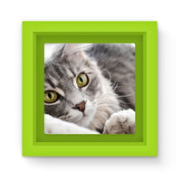 Cat Lying With Eyes Open Magnet Frame Green Homeware
