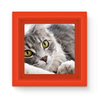 Cat Lying With Eyes Open Magnet Frame Red Homeware
