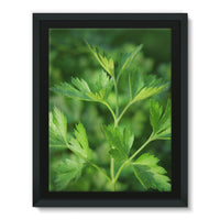 Close Picture Of Parsley Framed Canvas 12X16 Wall Decor
