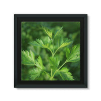 Close Picture Of Parsley Framed Canvas 14X14 Wall Decor